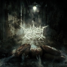 free at 25€+ orders: BRADI CEREBRI ECTOMIA - CD - Mangled Perception